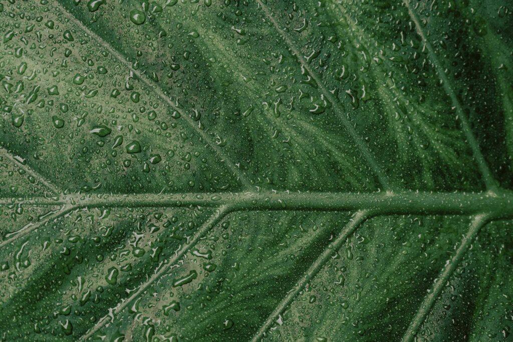 Green-1024×683